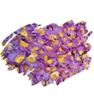 Blue Lotus (Nymphaea caerulea) Whole Dried Flowers