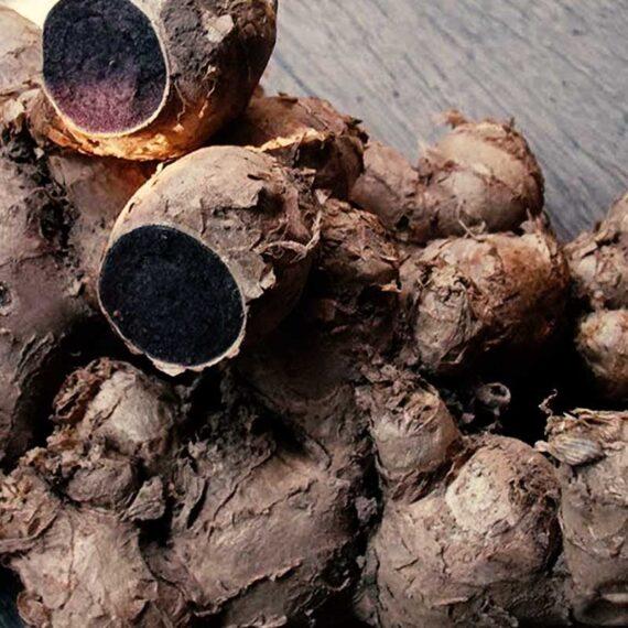 Black Thai Ginger (Kaempferia parviflora)