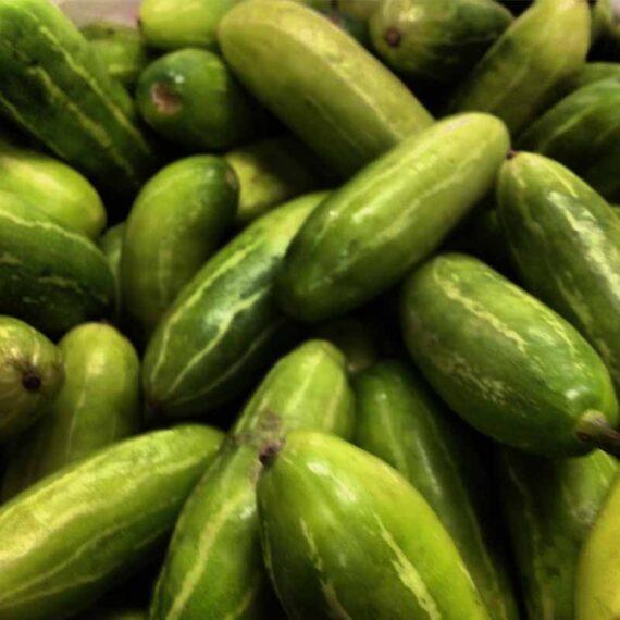 Ivy Gourd (Coccinia grandis)
