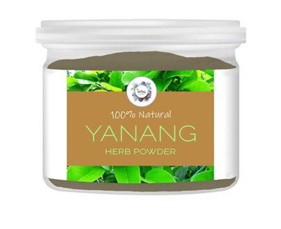 Yanang (Tiliacora triandra) Leaf Powder